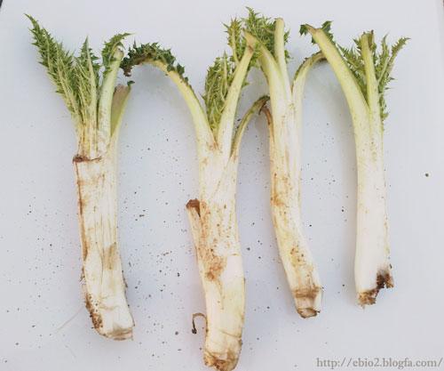 گیاهان-خوراکی-شهرستان-ملکشاهی-+خواص